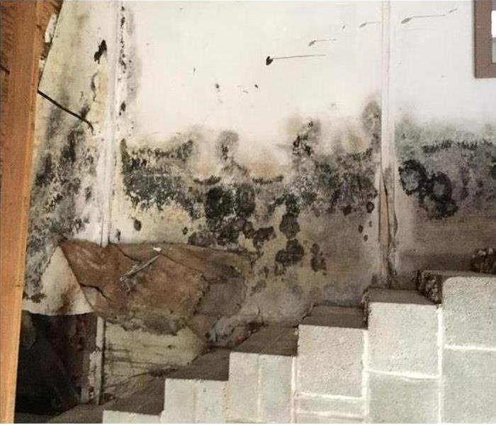 Mold Remediation Is Your Vista Home Growing Mold?